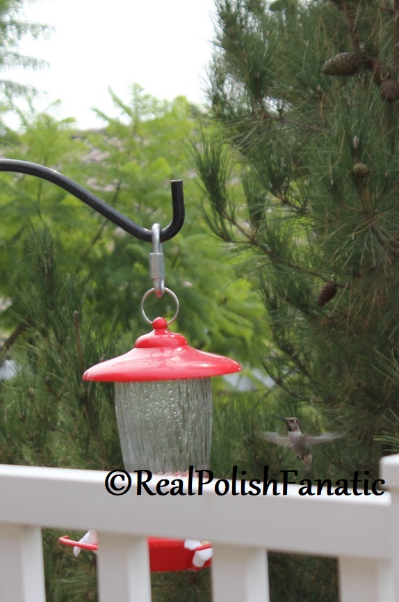 10-19-2017 Hummingbird (1)